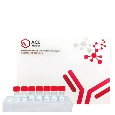 14-3-3 Family Antibody Sampler Kit